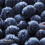 Blueberries-Fresh-Fruit-Healthy-Bulk