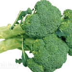 Broccoli-Vegetable-Isolated