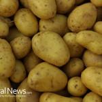 Bunch-Russet-Potatoes-Vegetables