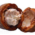 Cacao-Bean