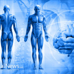 Computer-Model-Brain-Body-Man-Spine