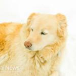 Dog-Fur-Snow