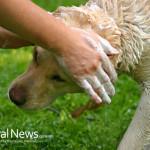 Dog-Soap-Wash-Head