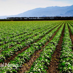 Field-Crops-Vegetables-Farm-Natural