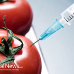 GMO-Tomatoes-Needle-Inject
