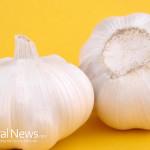 Garlic-On-Orange-Background