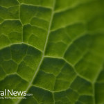 Green-Leaf-Close-Up