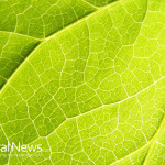 Green-Leaf-Close-up-Texture-Plant-Tree