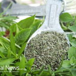 Herb-Scoop-Oregano-Plant