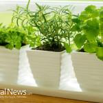 Home-Plants-Sunlight