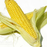 Isolated-Corn-Vegetable-Husk
