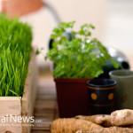 Medicinal-Plants-Herbs