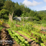 Organic-Garden-Vegetables-Farm