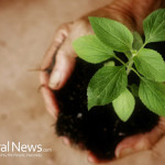 Soil-Plant-In-Hands-Nature
