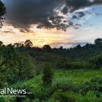Sunset-With-Dramatic-Sky-In-The-Tropical-Rainforest-Of-Ethiopia-Near-Awasa-