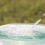Water-N-Bowl