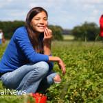 Woman-Garden-Farm-Strawberries-Crops-Happy-Outside