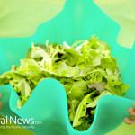 Woman-Green-Salad-Bowl