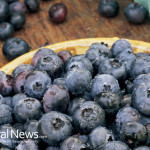 Blueberries-Wooden-Bowl