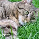 Cat-Play-Grass-Ball