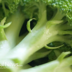 Close-Up-Broccoli