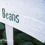 Farm-Organic-Beans-Sign-Farm