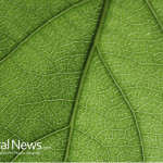 Green-Leaf-Close-Up-Plant