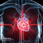 Hrr58-Heart