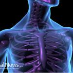 Human-Body-Bones